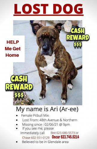 Lost Female Dog last seen 48th Ave & Northern, Glendale, AZ 85301