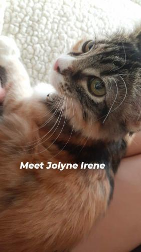 Lost Female Cat last seen Tuscano Elementary School (8033 w. Ableniz pl), Phoenix, AZ 85043