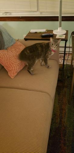 Found/Stray Female Cat last seen Atlantic, Virginia Beach, VA 23451