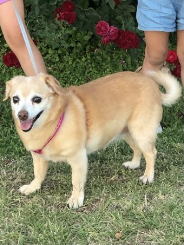 Lost Female Dog last seen 40th Street and Campbell , Phoenix, AZ 85018