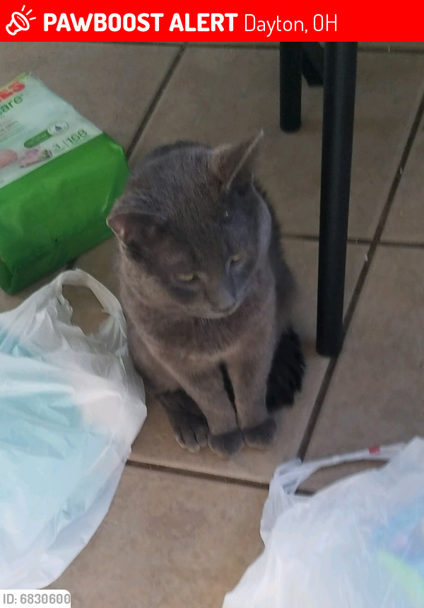 Lost Male Cat last seen Smithville, Dayton, OH 45420