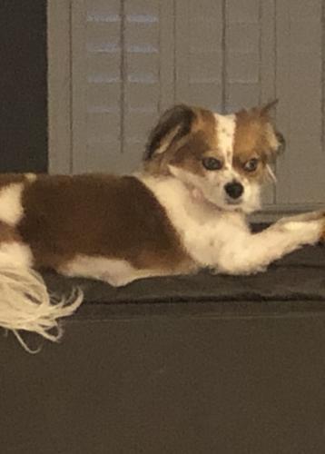 Lost Female Dog last seen GRAND TETON, BRADLEY, Las Vegas, NV 89149