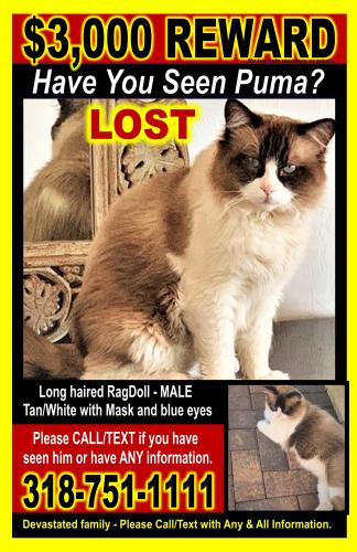 Lost Male Cat last seen Inside Rhodes Ranch near Orchard Course Drive, Las Vegas, NV 89148