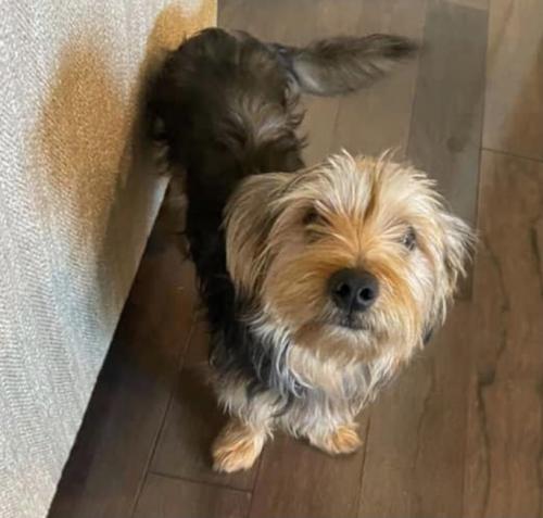 Lost Male Dog last seen Saint Benjamin Drive, Lafayette, LA 70506