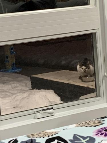 Found/Stray Unknown Cat last seen Hickory Hill Dr and Raymond St, Green Bay, WI 54304