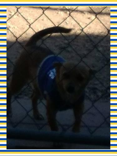 Lost Female Dog last seen 29th Ave and Butler Dr, Phoenix, AZ 85029