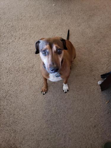 Lost Male Dog last seen N 23rd Ave and Beardsley Rd, Phoenix, AZ 85027
