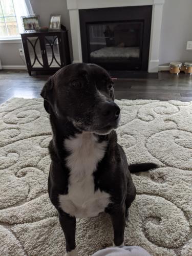 Lost Male Dog last seen Cedar Chase Estates, Clinton, MD 20735