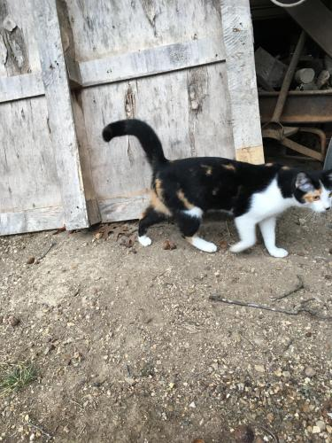 Found/Stray Unknown Cat last seen Near Fox Chase in Hixson, Chattanooga, TN 37343
