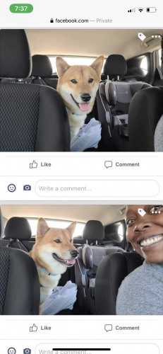 Lost Male Dog last seen Near Cox Landing , Newport News, VA 23608