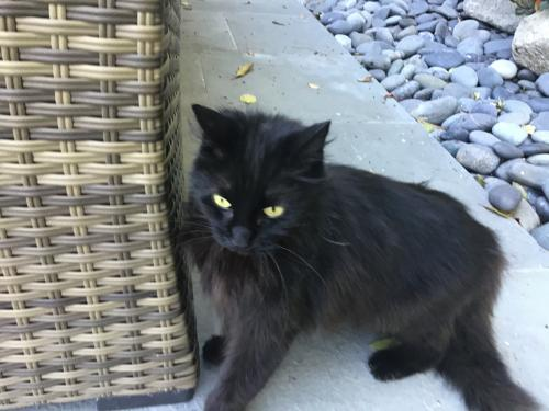 Found/Stray Unknown Cat last seen Near , Los Angeles, CA 90004