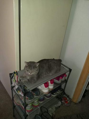 Lost Male Cat last seen By East high school between rosevelt and baird, Green Bay, WI 54301