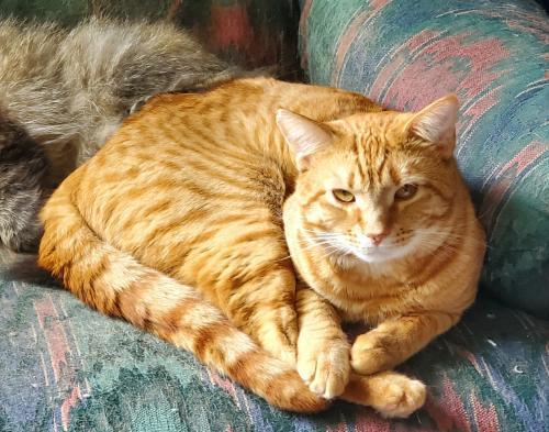 Lost Male Cat last seen Radburn Rd, Woodbridge, VA 22191