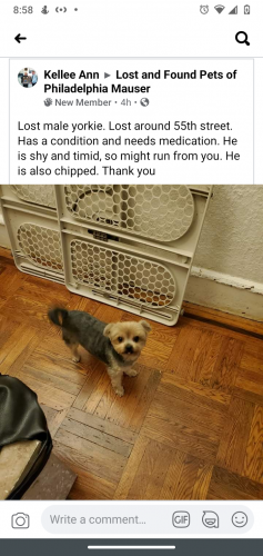 Lost Male Dog last seen 55th and Catherine st, Philadelphia, PA 19143