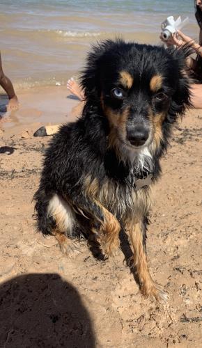 Lost Male Dog last seen Perryville Rd. & Van Buren St., Buckeye, AZ 85396