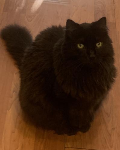 Lost Male Cat last seen Beasley Dr and Beasley Ct, Virginia Beach, VA 23462