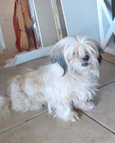 Lost Female Dog last seen McDowell , Phoenix, AZ 85035