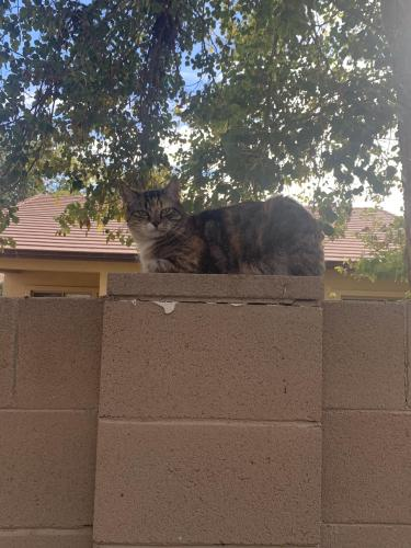 Lost Female Cat last seen Recker&Elliot, Gilbert, AZ 85234