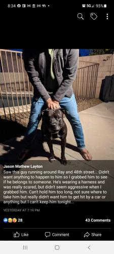 Lost Male Dog last seen 48th street and Ray road , Ahwatukee , Phoenix, AZ 85044