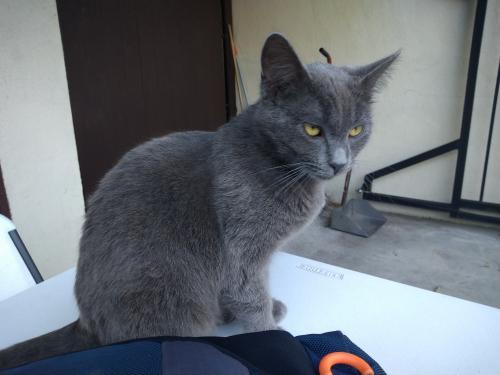 Lost Male Cat last seen Merced Ave & Remer Street, South El Monte, CA 91733