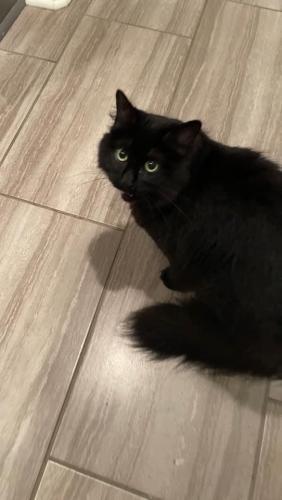 Lost Female Cat last seen Twin Meadow lane and Verot , Lafayette, LA 70508