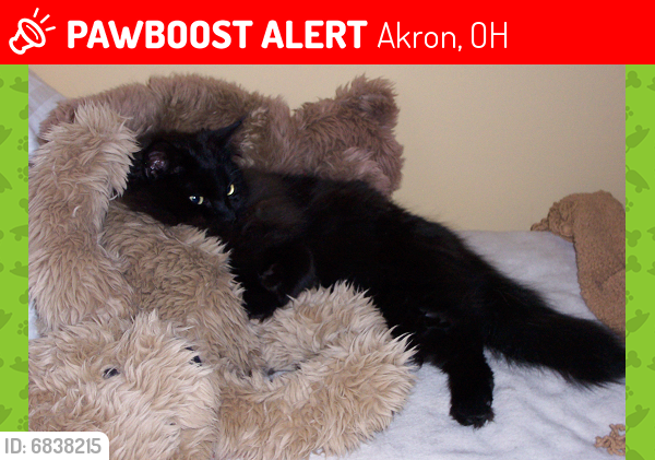 Lost Male Cat last seen Colonial hill drive & patterson avenue and high way , Akron, OH 44310