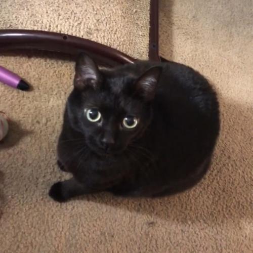 Lost Unknown Cat last seen Northern Redmill Farms. Ravencroft & Castle Hill area., Virginia Beach, VA 23454