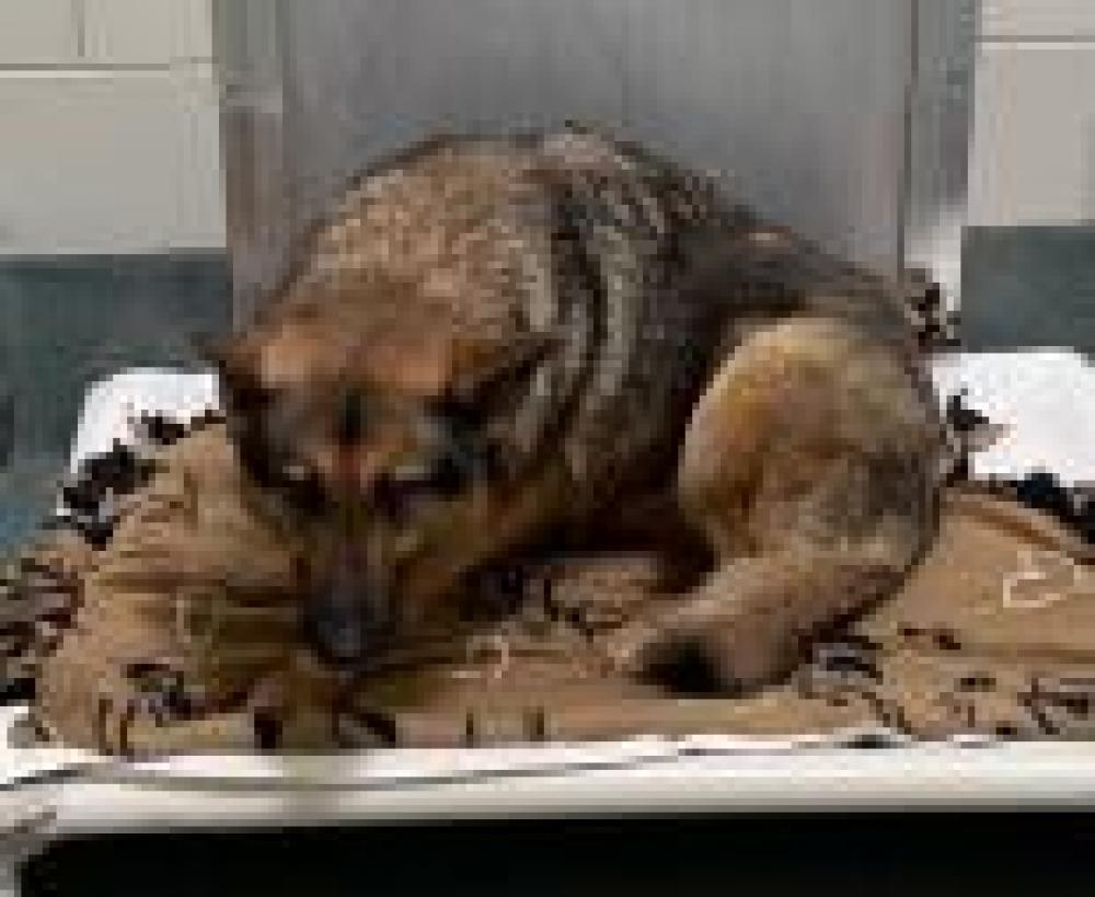 Shelter Stray Female Dog last seen Brandywine, MD 20613, Fairfax, VA 22032