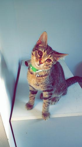 Lost Male Cat last seen Wayne street, Dayton, OH 45420
