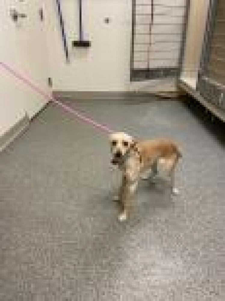 Shelter Stray Female Dog last seen Hamilton, OH 45013, Hamilton, OH 45011