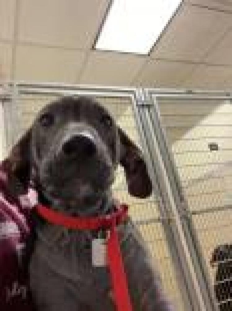 Shelter Stray Female Dog last seen Monroe, OH 45050, Hamilton, OH 45011
