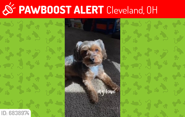 Lost Male Dog last seen East 55th Street, Cleveland, OH 44127