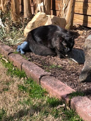 Found/Stray Unknown Cat last seen Corwood ave and Bonney Rd, Virginia Beach, VA 23452