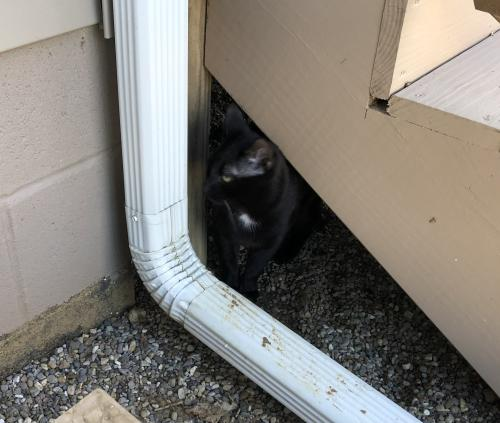 Found/Stray Unknown Cat last seen Near Lightner Lane , Englewood, OH 45322