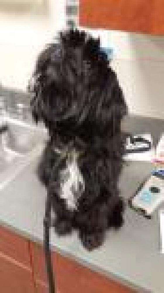 Shelter Stray Male Dog last seen Middletown, OH 45042, Hamilton, OH 45011