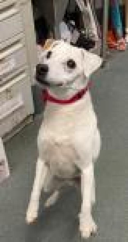 Shelter Stray Male Dog last seen Falls Church, VA 22043, Fairfax, VA 22032