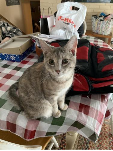 Lost Female Cat last seen Inside House , Green Bay, WI 54313