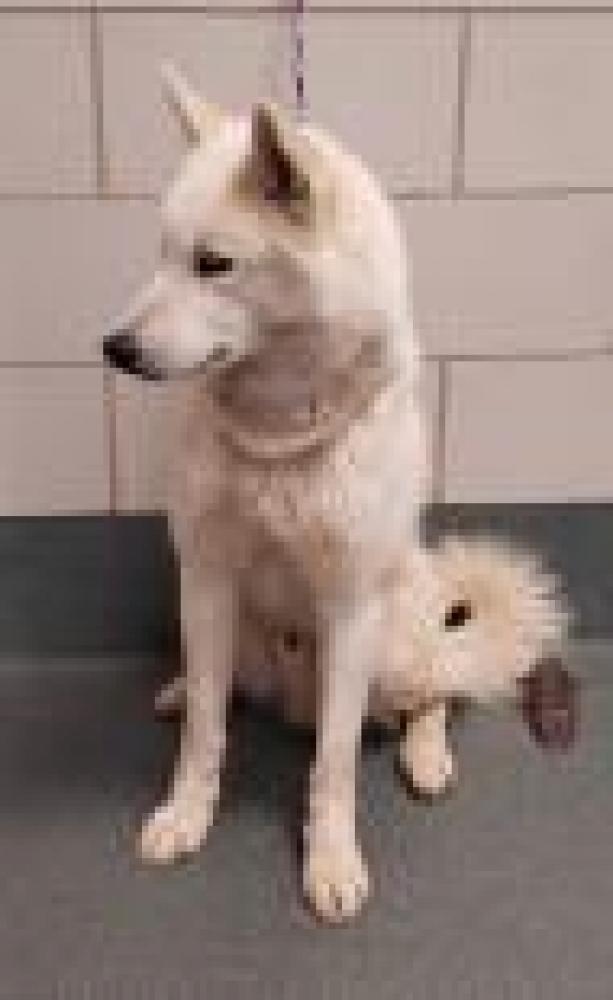 Shelter Stray Male Dog last seen Alexandria, VA 22309, Fairfax, VA 22032