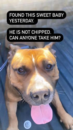 Found/Stray Male Dog last seen Piestewa Peak , Phoenix, AZ 85013