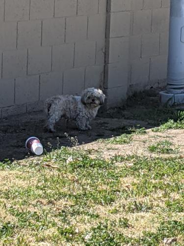 Found/Stray Unknown Dog last seen Glenn F. Burton Elementary School, Glendale, AZ 85301