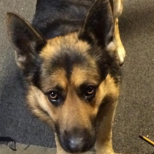 Lost Male Dog last seen Ithaca Ave, Los Angeles, CA 90032