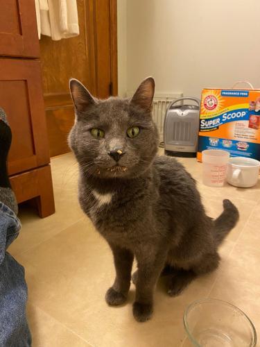 Found/Stray Unknown Cat last seen Brewster St, Appleton, WI 54911
