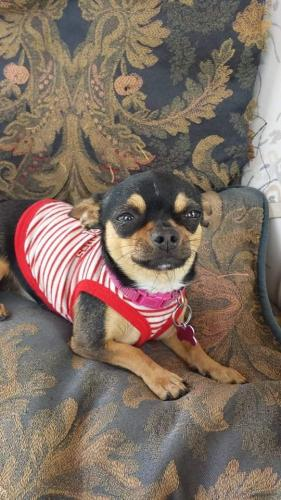 Lost Female Dog last seen Westhaven st and redondo Blvd , Los Angeles, CA 90016