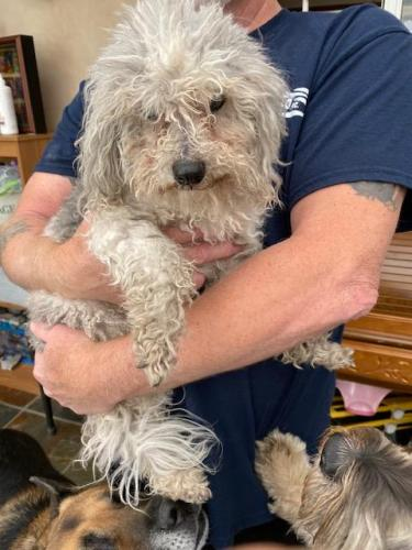 Found/Stray Female Dog last seen Camino Real and Primrose, Los Angeles County, CA 91016