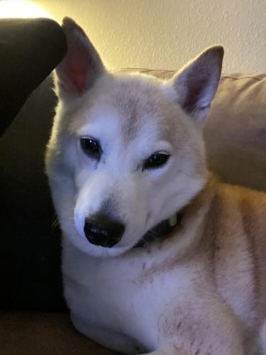 Lost Male Dog last seen Gabriel Dr & Hummel Dr, Norfolk, VA 23502