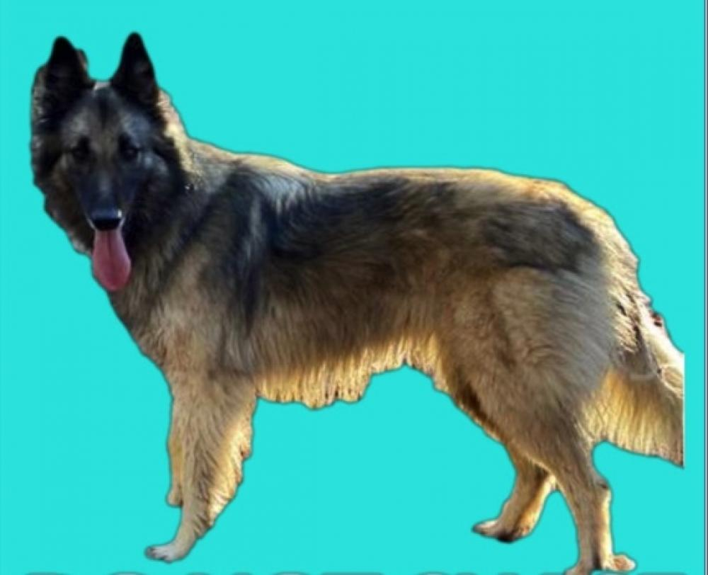 Lost Female Dog last seen Milton Road/ Albemarle County Charlottesville, Gordonsville, VA 22942