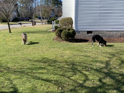 Found/Stray Unknown Dog last seen Weeping Cedar Trail, Chesapeake, VA 23323