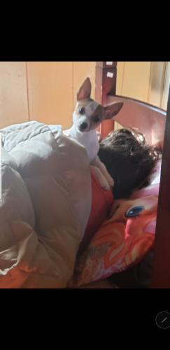 Lost Female Dog last seen Stutes street off of hwy 90 near walmart , Crowley, LA 70526