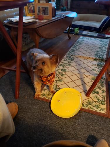 Lost Male Dog last seen Bosley & Maryland Avenues , Suffolk, VA 23434