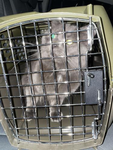 Found/Stray Unknown Cat last seen Glenville Circle, Virginia Beach, VA 23464
